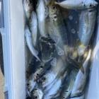 『2月22日アジ釣り』の画像