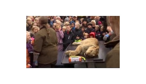 【海外の反応】ライオン解剖を子供に公開、デンマーク動物園に非難殺到
