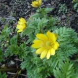 『桔梗町内の花花』の画像