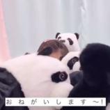 『パンダに埋もれる与田ちゃんが可愛い動画ですw【乃木坂46】』の画像