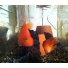 『熱帯魚』の画像