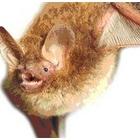 『今月の月刊蝙蝠』の画像