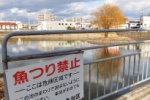 その昔、雷魚がめっちゃおった『フェスト前の池』は今は釣り禁止~インサイト交野No.112~