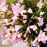 『ニーズの泉(4150回記念)(2)』の画像