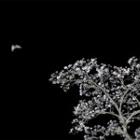 『桜夜空を飛ぶ』の画像