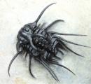 古代生物のフォルムワロタwwww