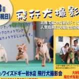 『【飛行犬撮影会開催】11月3日(火)ワイズドギー射水店』の画像