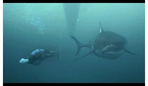 【動画+海外の反応】「フェルプスがサメと競泳対決」