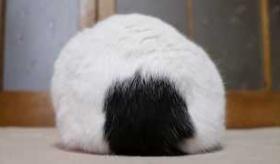 【動物】  日本から おにぎりに見える猫の動画。  海外の反応