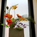 『ポピー:今月の待合室の花』の画像