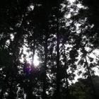 『昼の森』の画像