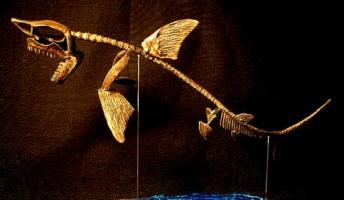 サメとシャチの骨格の差wwwwwwwwwwwww