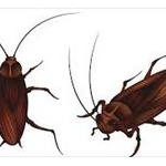 ゴキブリの能力で打線組んだwwwwwwwww