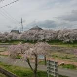 『会津若松 桜が満開です!』の画像