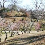 『大阪市立大学理学部附属植物園に行ってまいりました。』の画像