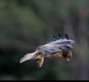 【衝撃の映像】鷹さん、空中で頭だけ完全に静止する
