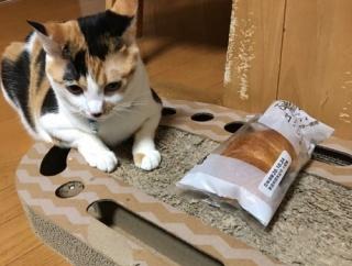 「ふんわりパン」を「ぺちゃんこパン」にする泥棒猫