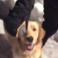 【イヌ】 飼い主が散歩のついでにデートをしていた。恋人と手を繋いで歩く → 犬はこうなる…