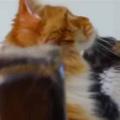 【ネコ】 風船が天井に上がって届かない。取ってあげようか? 大丈夫です → 猫はこうした…