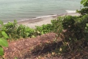 【北海道】飼い犬がクマに襲われる ハンターなど4人が警戒中にうなり声 2人崖から滑り落ちて重軽傷