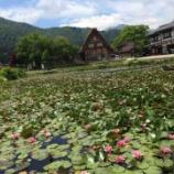 『【2015年5月】白川郷に咲く睡蓮の花【すいれんのさく頃に】』の画像