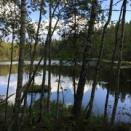 フィンランドの大自然を満喫しよう ヌクーシオ国立公園