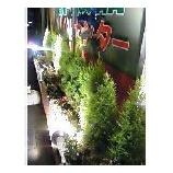 『成長・所沢店の花壇』の画像