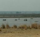 100頭を超えるカバが大量死 原因は干魃で劇的に増殖した「炭疽菌」 ナミビア・国立公園