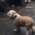 うちの子イヌは隣のおじいさんが大好き。まだ来ないかなぁ → いつも窓から庭を気にしています…