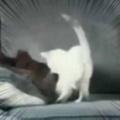 子ネコが犬のところにやってきた。遊ぼうよ♪ 今はその時間じゃない → 犬はこうした…