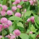 路傍に咲く花のように(3)