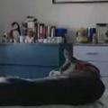 ネコがべッドの上でくつろいでいた。まったり、ごろにゃ~ん♪ → こうなる…
