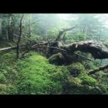 『自然に戻った登山道と今後の自粛解除』の画像