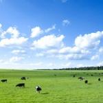 年収2000万の農家経営だけど質問ある?