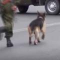 イヌは「相棒」を置き去りになんかしない! 兵士がトラックから落ちてしまう → 犬はこうした…