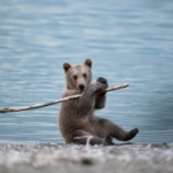 『登校中 あいさつしたら クマだった(山形)』の画像