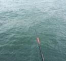釣りに来たらおっきい魚釣れたンゴ