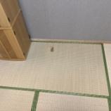 『畳の交換は火災保険と見積もりサイトで!』の画像