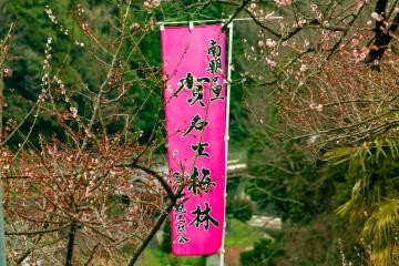 賀名生梅林と西吉野の桃源郷