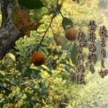『山柿』の画像