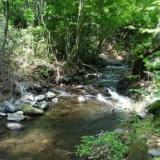2007年の釣り 6月12日 嬬恋の川のサムネイル