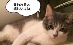 猫にだって優しい言葉はわかる