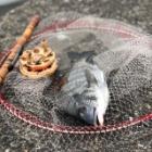 『川﨑新堤 7月20日 釣行記』の画像