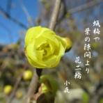 小夜風衣  (五七五ブログ)