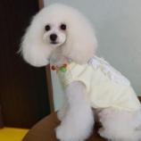 『北陸初!!パリ発の犬服。Mimtto。』の画像