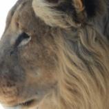 『ライオンと話す男』の画像