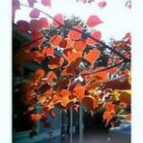 『秋の香り』の画像