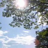 『庭木の すすめ』の画像