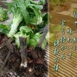 『フォト短歌「収穫」』の画像