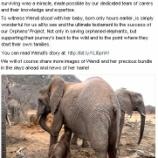 『助けたゾウが仔ゾウを恩人に見せに来ました』の画像